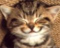 GATTOTERAPIA Imparare dai gatti ad essere…felinamente felici