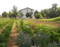 """5 Luglio 2015:  """"Quattro salti nell' Orto"""" presso Podere Acquechiare/BioAgriturismo- RE"""